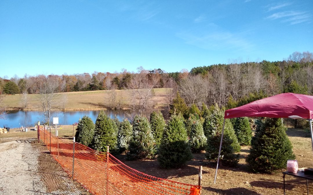 What To Know About Setting Up A Christmas Tree Lot